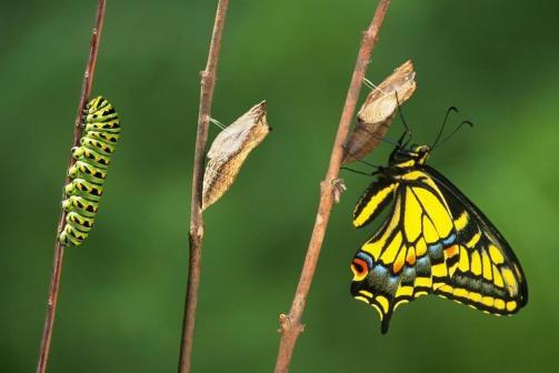 come-osservare-la-trasformazione-di-un-bruco-in-farfalla_e7a7a7a697bb014168acb8a0a0c191ab